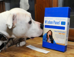 Pet DNA Testing Kit